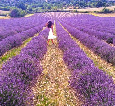 Lavanta Kokulu Mor Rota: Provence Gezi Rehberi